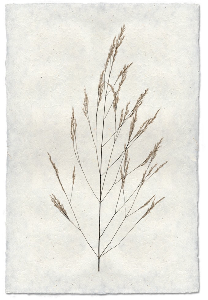Wheat Form