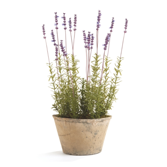 "This French Lavender Potted is an Amethyst Favorite, adding a gorgeous pop of color to any room  Size: 9"" x 9"" x 21"""