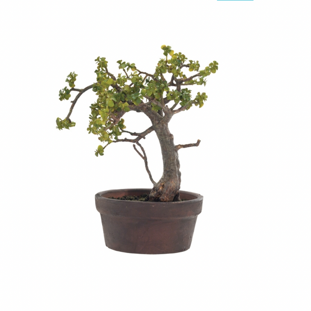 "We love the organic, earthy feel that this Jade Bonsai brings to a space. Place in your office, bathroom, or entry way and watch the space come to life!  Size: 12""W x 14""H"