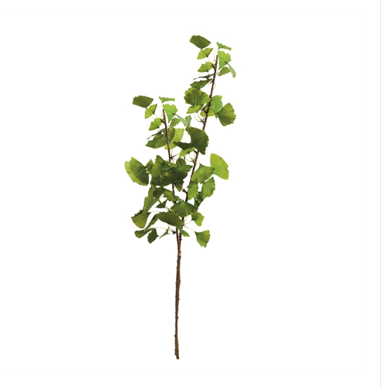 "The Ginkgo Branch Bundle is made to look 100% realistic- you'd swear they were cut this morning. Arrange in a glass jar or ceramic vase, a beautiful way to bring new life to your home or business.  Size: 40""h"
