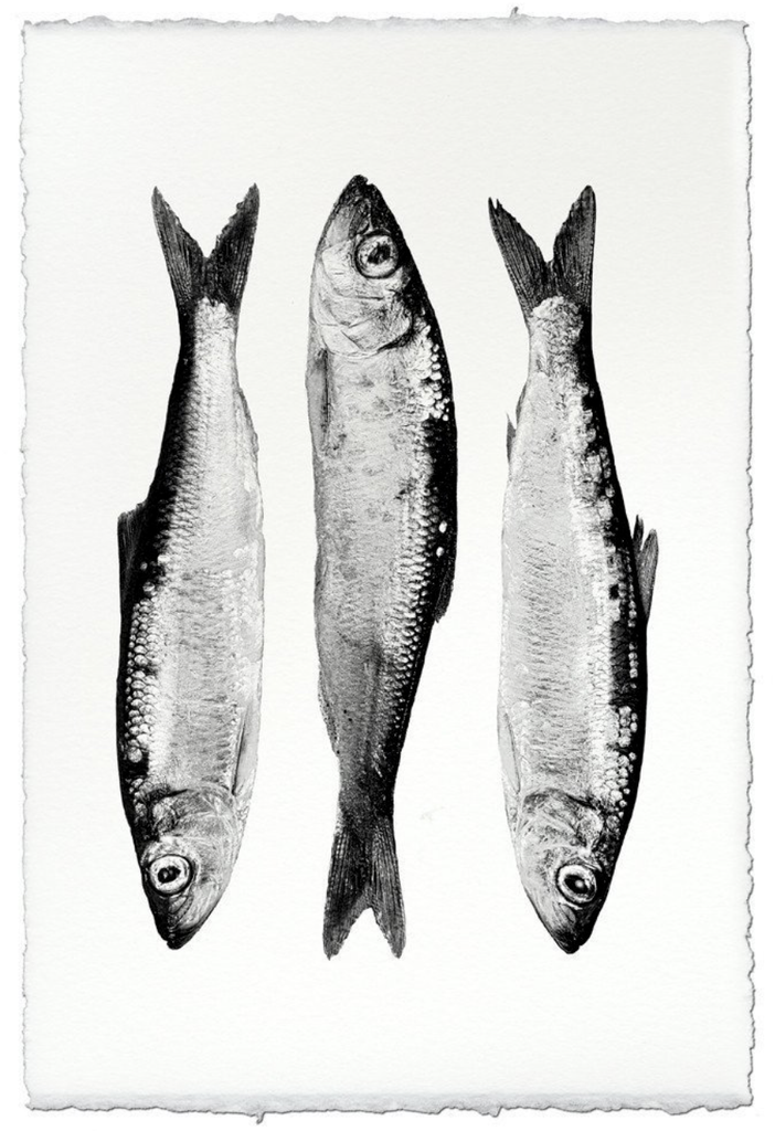 Three Herring
