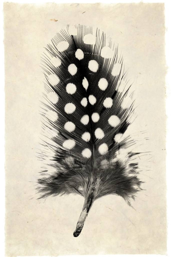 Feather Study #1