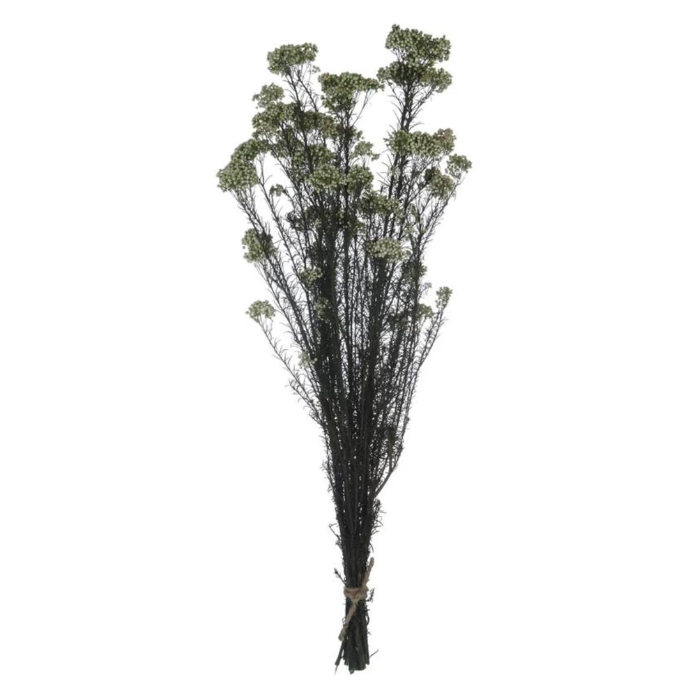 Dried Natural Sago Bush Bunch - Amethyst Home
