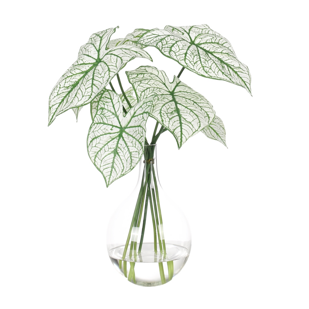 Caladium in Glass Vase