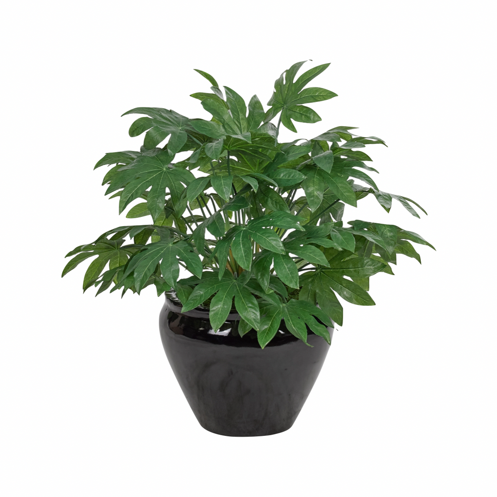 "We love the life this Japanese Aralia Bush brings to the room. The large black pot completes the whole look.   Size: 29""W x 31""H"