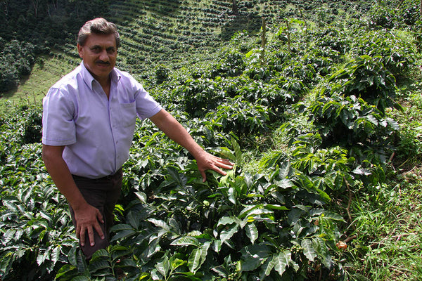 Don Roger and coffee plants