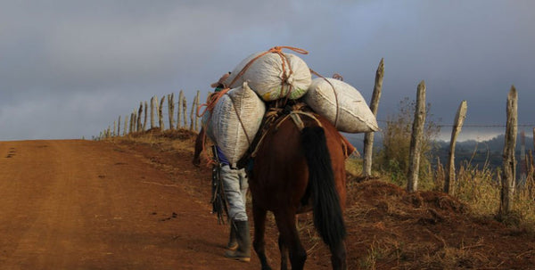Horse with coffee beans