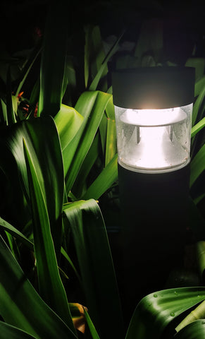 solar light surrounded by large leaves