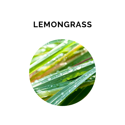 LEMONGRASS Essential Oil - 10 ml