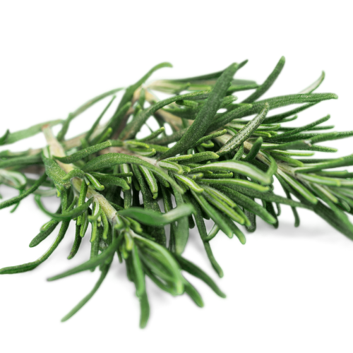 ROSEMARY Essential Oil - 10 ml