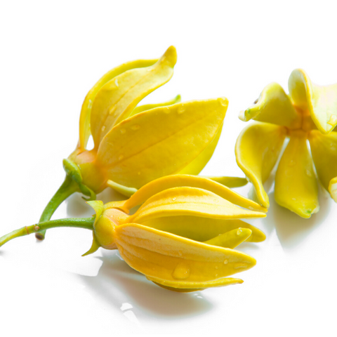 products/YLANGYLANG1.png