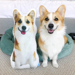 Tofu the Corgi Pillow