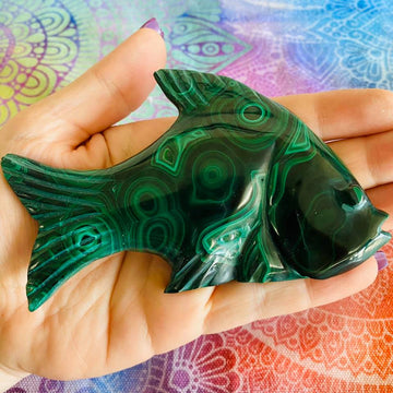 Malachite Fish