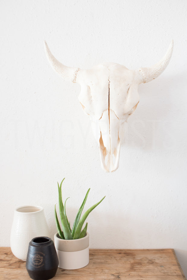 twigyposts,Bohemian Collective | Individual Photos | Longhorn,TwigyPosts,Individual Stock Photos