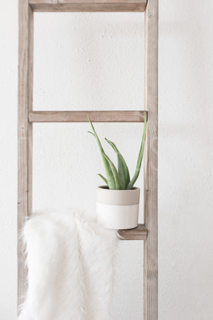 twigyposts,Bohemian Collective | Individual Photos | Aloe Plant,Jana Bishop Collection,Individual Stock Photos