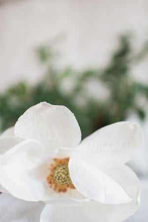 Magnolia Stock Photos #8