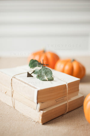 Fall Stock Photos #4211