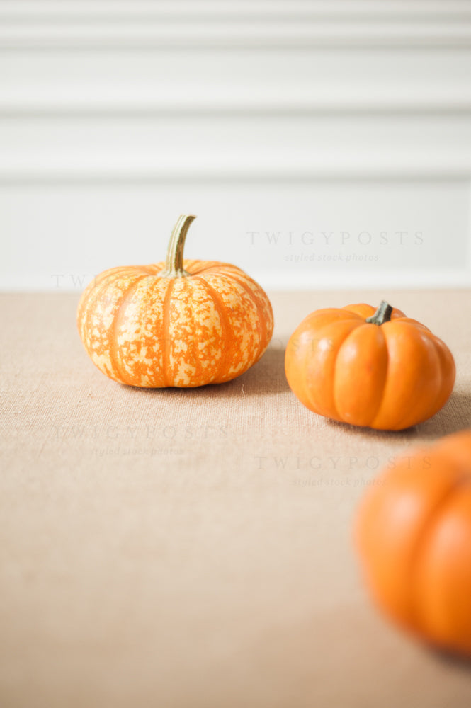Fall Stock Photos #4212