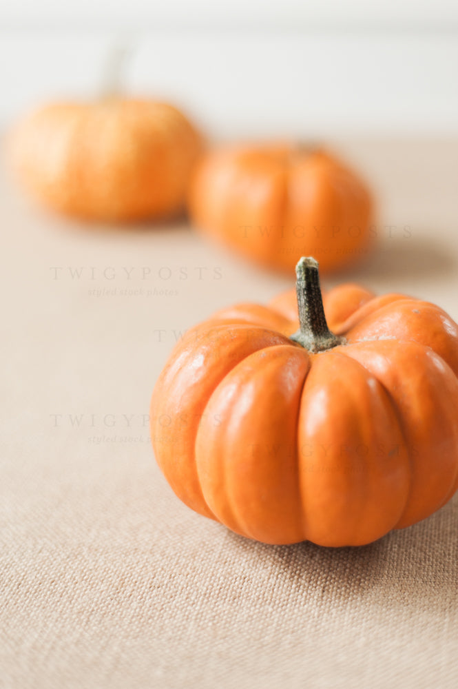 Fall Stock Photos #4215