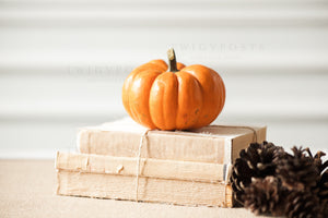 Fall Stock Photos #4327