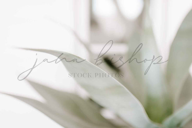 twigyposts,Beach House | Styled Stock Photo Bundle #136,Jana Bishop Collection,Photo Bundles