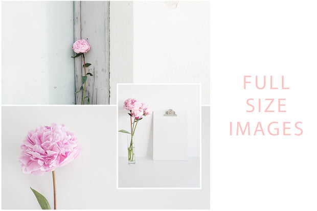 twigyposts,Valentines Stock Photo Bundle | Pink Peonies,TwigyPosts,Photo Bundles