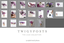 Spring Lilac Stock Photos