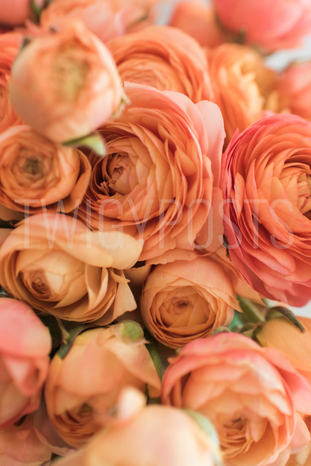 twigyposts,Fall Florals,TwigyPosts,Individual Stock Photos