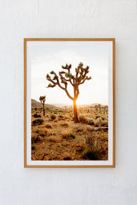 Portrait of the desert II