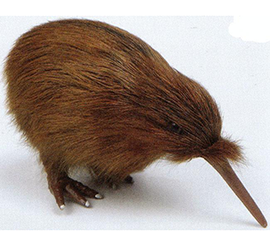 Brown Kiwi small - KIW3 Pack of 4