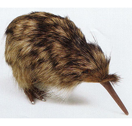 Spotted Kiwi small - KIW1 Pack of 4