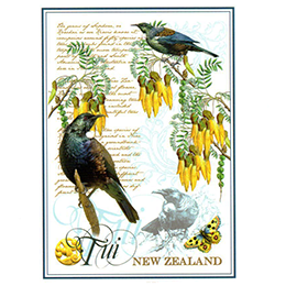 Tui NZ Designer Tea Towel - 65182 PACK of 6