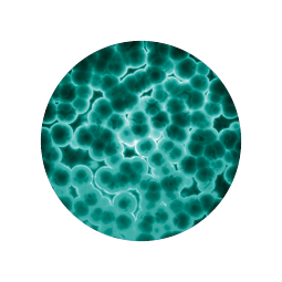1 billion colony forming units (CFU) per daily dosage