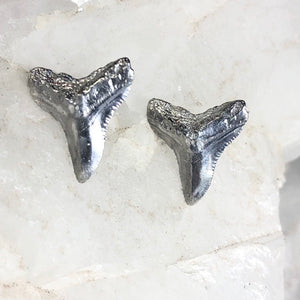 Sterling silver shark tooth stud earring