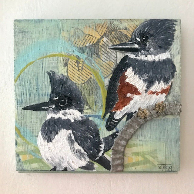 Belted Kingfisher (Male and Female)