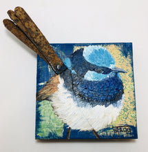 Fairy Wren (Blue Wren)