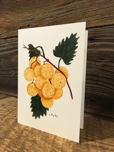 Bronze Muscadine Watercolor Card