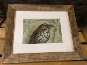 Brown Thrasher - original