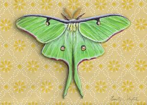 Luna Moth on yellow
