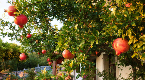 Grow Your Very Own Healthy And Delicious Fruits At Your Own Home!