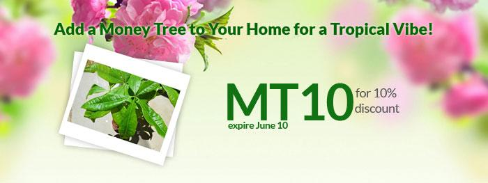 9GreenBox July Newsletters: Add a Money Tree to Your Home for a Tropical Vibe!
