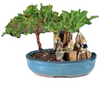 9GreenBox - Juniper Bonsai Tree with Fisherman Figure - 9GreenBox