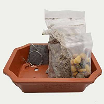 Bonsai Potting Kit, 6.25
