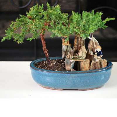 9GreenBox - Juniper Bonsai Tree with Fisherman Figure