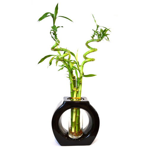9GreenBox - Lucky Bamboo Spiral Style 8'' Tall Hollow Ceramic Vase