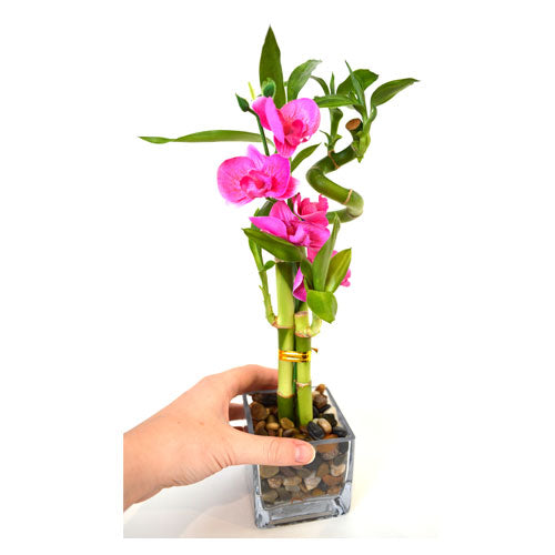 9greenbox Lucky Bamboo Spiral Style With Silk Flowers And Glass