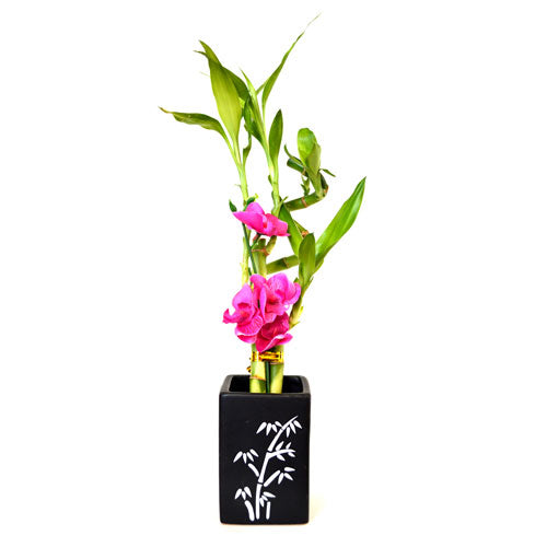 9GreenBox - Lucky Bamboo Spiral Style with Silk Flowers and Ceramic Vase
