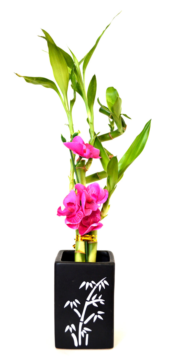 9GreenBox - Lucky Bamboo Spiral Style with Silk Flowers and Black Ceramic Vase