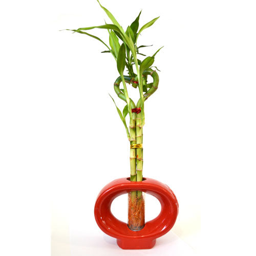 9GreenBox - Lucky Bamboo Heart Style with Hollow Vase - 9GreenBox