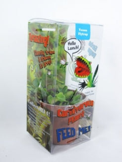 "9GreenBox - Venus Fly Trap w/ Gift Box Packing Large 3"" Pot CARNIVOROUS DIONAEA - 9GreenBox"